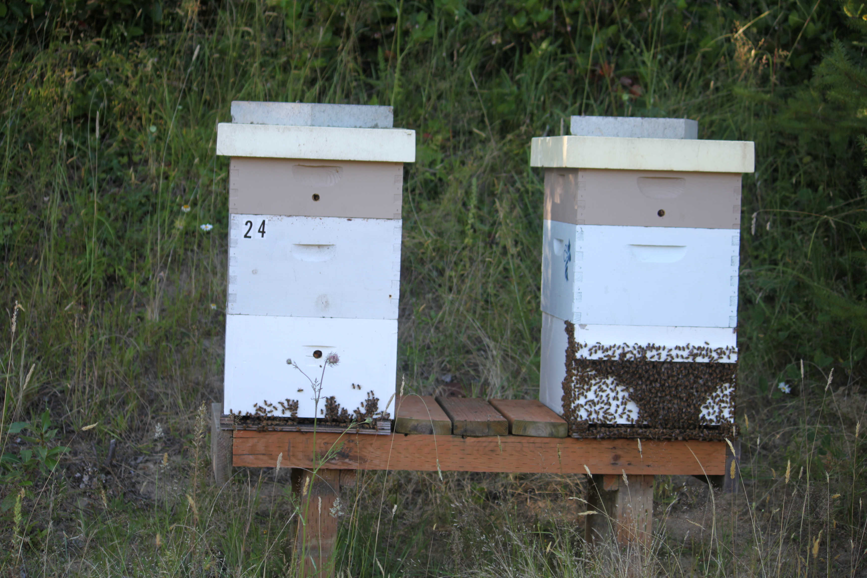 Beekeeping Services Onsite Beekeeping Consultant