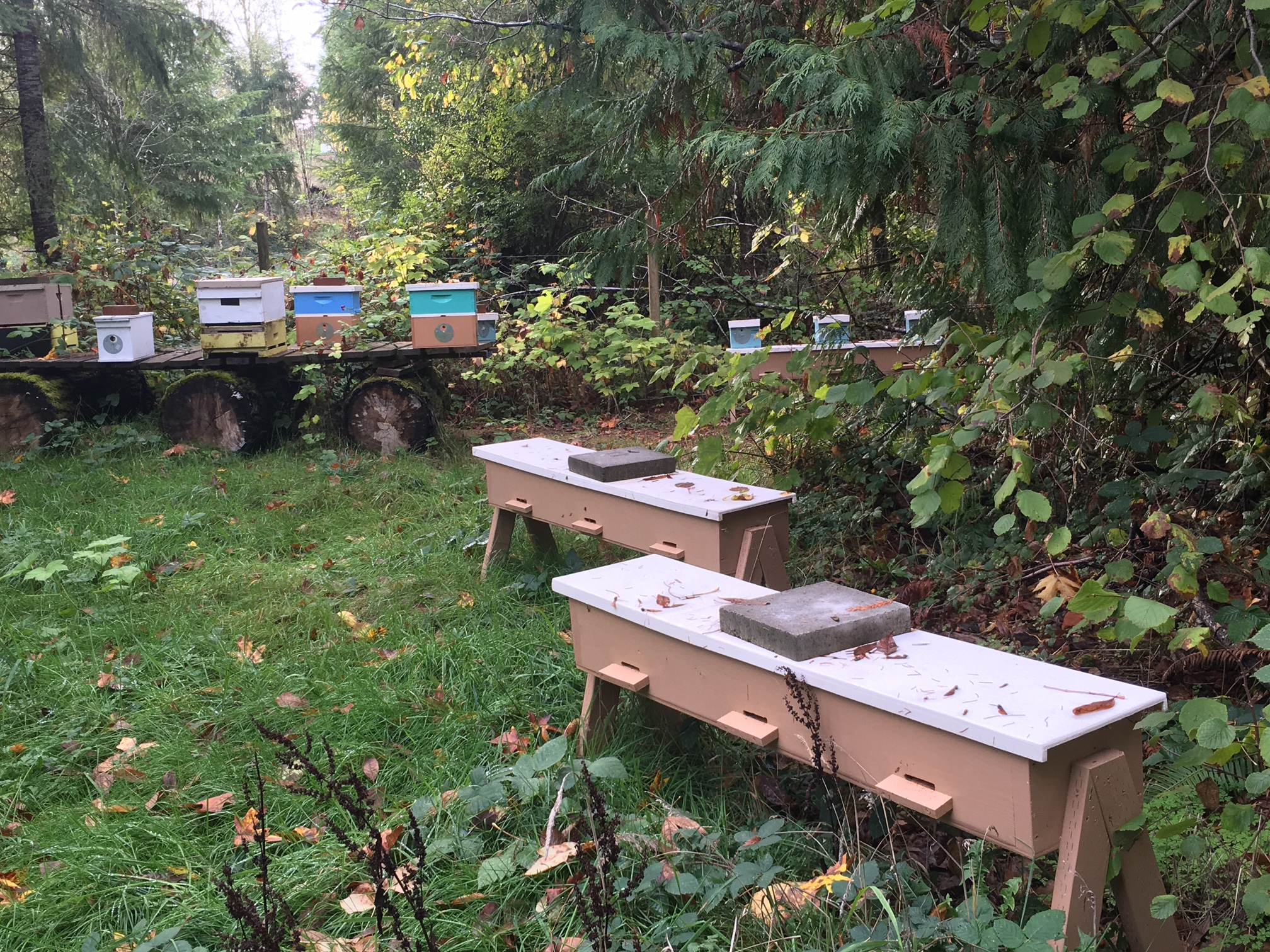 Beekeeping Services Queen Rearing