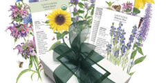 Bee Friendly Plant Seeds