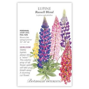 Lupine Russell Blend