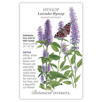 Hyssop Lavender Hyssop