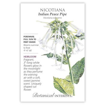 Nicotiana Indian Peace Pipe