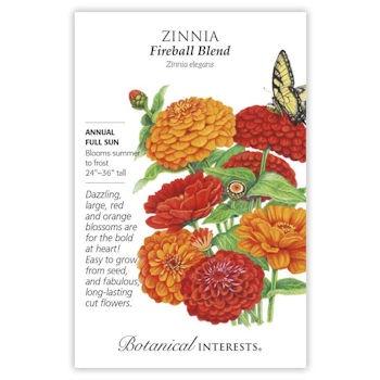 Zinnia Fireball Blend