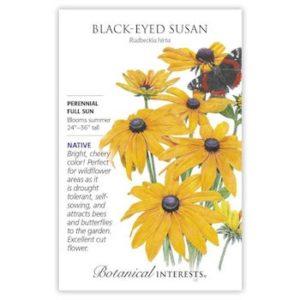 Black-Eyed Susan