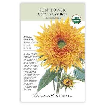 Sunflower Goldy Honey Bear