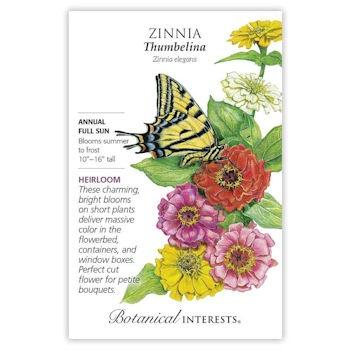 Zinnia Thumbelina