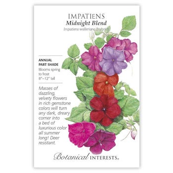 Impatiens Midnight Blend