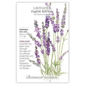 Lavender English Tall/Vera