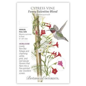 Cypress Vine Funny Valentine Blend
