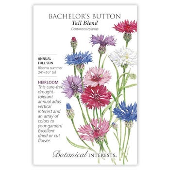 Bachelor's Button Tall Blend