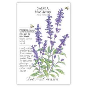 Salvia Blue Victory