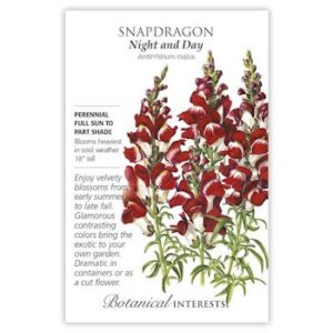 Snapdragon Night and Day