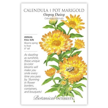 Calendula Pot Marigold Oopsy Daisy