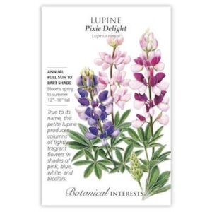 Lupine Pixie Delight