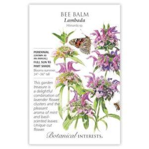 Bee Balm (Lambada)