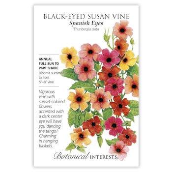 Black-Eyed Susan Vine Spanish Eyes