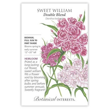Sweet William Double Blend