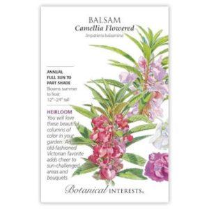 Balsam Camellia Flowered
