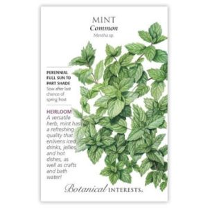 Mint (Common)
