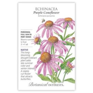 Enchinacea Purple Coneflower