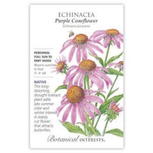 Enchinacea Purple Coneflower
