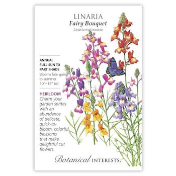 Linaria Fairy Bouquet