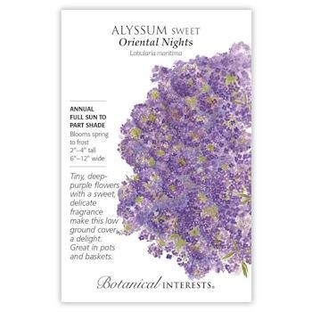 Alyssum Sweet Oriental Nights
