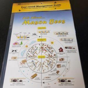 Mason Bee lifecycle poster