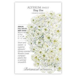 Alyssum Sweet Tiny Tim