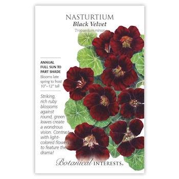 Black Velvet Nasturtium Seeds