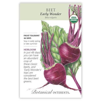 Early Wonder Beet Seeds ORG