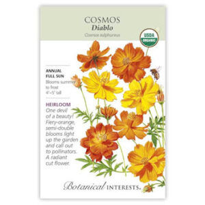 Diablo Cosmos Seeds ORG, Heirloom