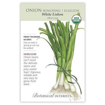 White Lisbon Bunching/Scallion Onion Seeds ORG, Heirloom