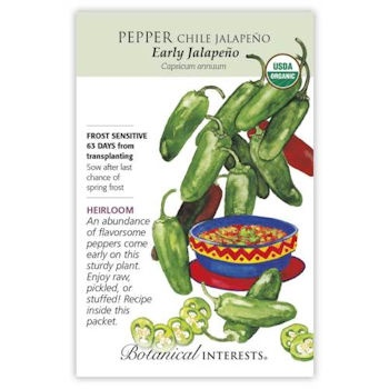 Early Jalapeño Chile Pepper Seeds ORG, Heirloom