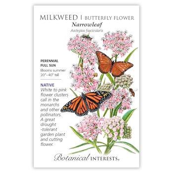 Narrowleaf Milkweed/Butterfly Flower Seeds, Native
