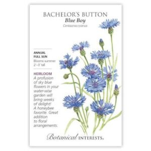 Blue Boy Bachelor's Button Seeds, Heirloom