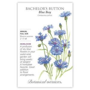 Blue Boy Bachelor's Button Seeds, Heirloom