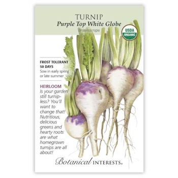 Purple Top White Globe Turnip Seeds ORG, Heirloom