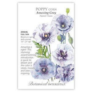 Amazing Grey Corn Poppy Seeds