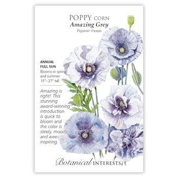 Amazing Grey Corn Poppy Seeds