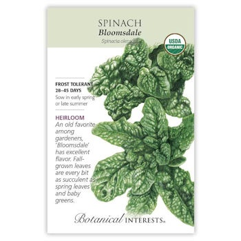 Bloomsdale Spinach Seeds ORG, Heirloom