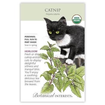 Catnip Seeds ORG, Heirloom
