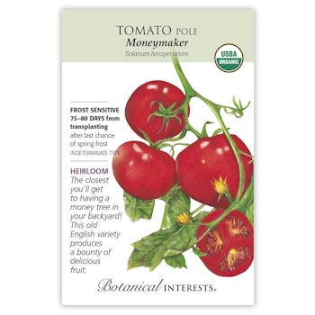 Moneymaker Pole Tomato Seeds ORG, Heirloom