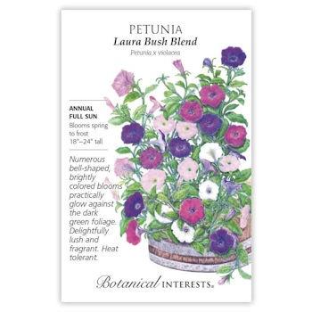 Laura Bush Blend Petunia Seeds
