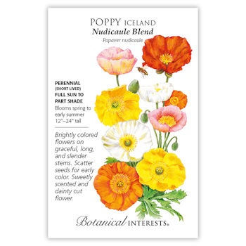 Nudicaule Blend Iceland Poppy Seeds