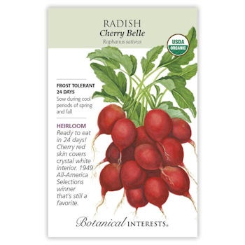 Cherry Belle Radish Seeds ORG, Heirloom
