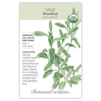Broadleaf Sage Seeds ORG, Heirloom