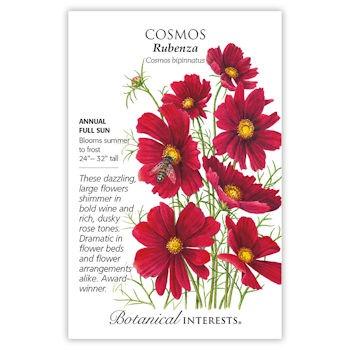 Rubenza Cosmos Seeds